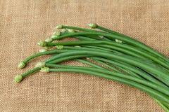 Erba cipollina di aglio verde Fotografie Stock