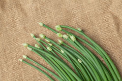 Erba cipollina di aglio verde Fotografie Stock Libere da Diritti