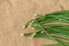 Erba cipollina di aglio verde Fotografia Stock Libera da Diritti