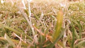 erba con effetto fotografie stock