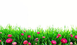 Erba con i fiori Fotografie Stock