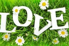 Erba con i fiori e l'amore bianco del testo Immagini Stock
