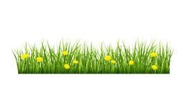 Erba con i fiori gialli Fotografie Stock