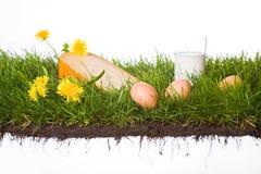Erba con il latte e le uova del formaggio Fotografia Stock