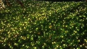 erba con illuminazione di Chrismas Immagini Stock
