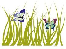 Erba con la farfalla fotografia stock