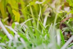 Erba con le foglie asciutte vaghe nei precedenti di piccolo campo Fotografia Stock