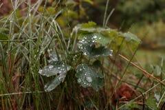 Erba con le gocce di pioggia Fotografie Stock Libere da Diritti