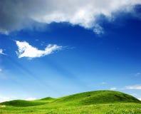 Erba con un cielo blu Fotografia Stock
