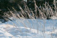 Erba congelata Fotografia Stock