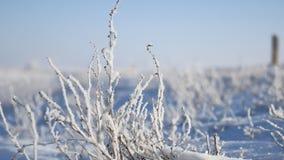 Erba congelata accanto al movimento di inverno di viaggio dell'itinerario della strada principale dell'auto archivi video