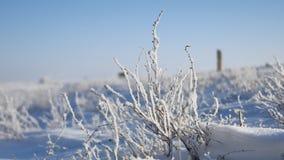 Erba congelata accanto al movimento di viaggio dell'itinerario della strada principale dell'auto stock footage