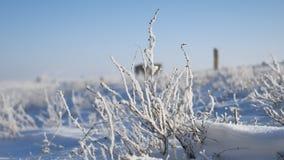 Erba congelata accanto al movimento di viaggio dell'itinerario della strada principale dell'inverno automatico video d archivio