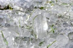 Erba congelata Immagine Stock
