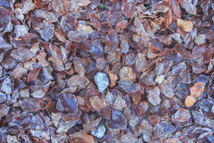 Erba congelata e foglie congelate Immagine Stock Libera da Diritti