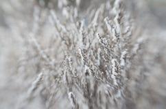 Erba congelata inverno Fotografia Stock Libera da Diritti