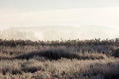 Erba congelata su una mattina di congelamento di inverno con gli alberi nel backgroud Immagini Stock Libere da Diritti