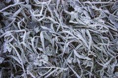 Erba congelata sul campo a novembre Fotografia Stock