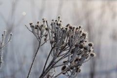 Erba congelata sull'inverno Fotografia Stock Libera da Diritti