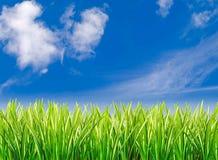 Erba contro cielo blu nuvoloso Immagine Stock