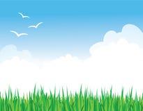 Erba contro un cielo blu Immagini Stock