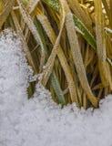 Erba coperta di neve Fotografia Stock