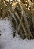 Erba coperta di neve Fotografia Stock Libera da Diritti