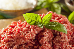 Erba cruda organica Fed Ground Beef Fotografie Stock