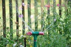 Erba d'innaffiatura dello spruzzatore del giardino al giorno soleggiato ed alle goccioline di acqua fotografia stock libera da diritti