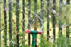 Erba d'innaffiatura dello spruzzatore del giardino al giorno soleggiato ed alle goccioline di acqua immagine stock libera da diritti