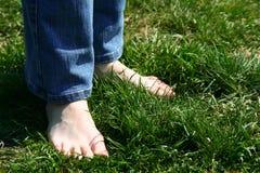 erba dei feets fotografia stock libera da diritti
