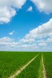 Erba del campo con il cielo Immagine Stock