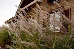Erba del campo contro la finestra di una casa di legno fotografia stock