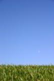 Erba del cielo Fotografie Stock