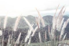 Erba del fianco di una montagna Fotografia Stock Libera da Diritti