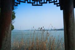 Erba del fiore sul fondo del fiume e del cielo blu Fotografia Stock