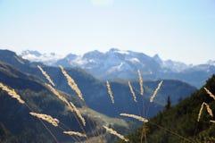 Erba del fiore sulla collina della montagna Immagine Stock
