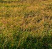 Erba del fondo Verde giallo Fotografia Stock