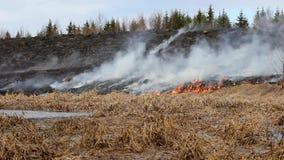 Erba del fuoco Pericoloso per le foreste e la gente archivi video