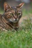 erba del gatto fotografia stock