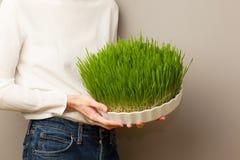 Erba del grano Coltivazione e giardinaggio urbani Immagine Stock Libera da Diritti
