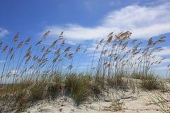 Erba del mare nel vento Immagini Stock