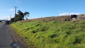 Erba del pendio della collina dell'Australia del paesaggio Fotografia Stock