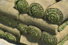 Erba del tappeto erboso della piota Fotografia Stock