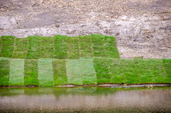 Erba del tappeto erboso vicino ad acqua Immagini Stock Libere da Diritti
