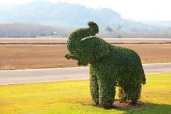 Erba dell'elefante Fotografia Stock Libera da Diritti