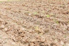 Erba dell'erbaccia sulla terra coltivata terra del suolo Immagine Stock Libera da Diritti