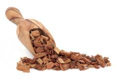 Erba della corteccia della quercia Immagini Stock