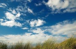 Erba della duna immagine stock