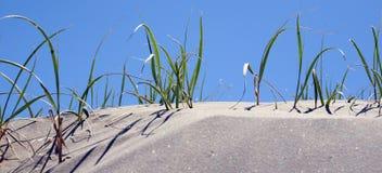 Erba della duna Fotografia Stock Libera da Diritti